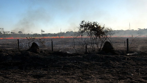 The Burning Season in Acre