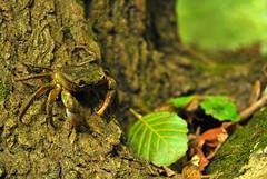 DSC_0257 (copi35) Tags: tree algeria nikon crab d60 jijel