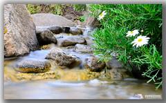 Water VII (© Sisco) Tags: flowers naturaleza flores flower nature water colors grancanaria agua colours flor canarias colores canaryislands nd8 tamron1750f28 natureselegantshots d7000 fotograncanaria fotosisco nikond7000