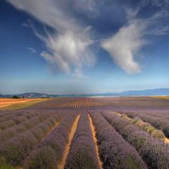 I like the Provence (rinogas) Tags: france color clouds nikon lavender provence hdr idream valensol vertorama rinogas fleursetpaysages