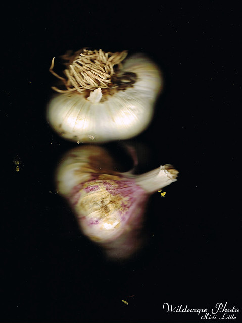 Polish White garlic