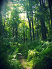 enchanted (kbgrant) Tags: green nature poconos verdant lush ferns fecund primeval paradiselookslikethis