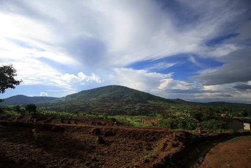Rwanda: Brand New Rice Paddies