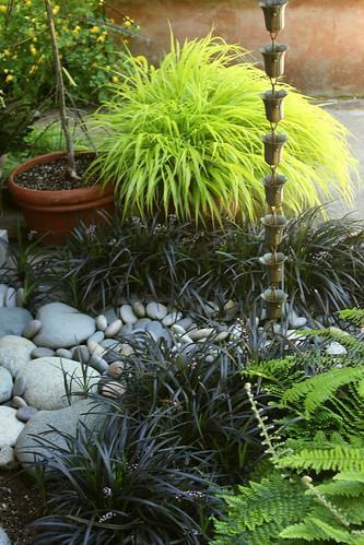 rain chain planting