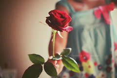 ( ~ ) Tags: flowers red love rose canon 50mm flickr pretty sara