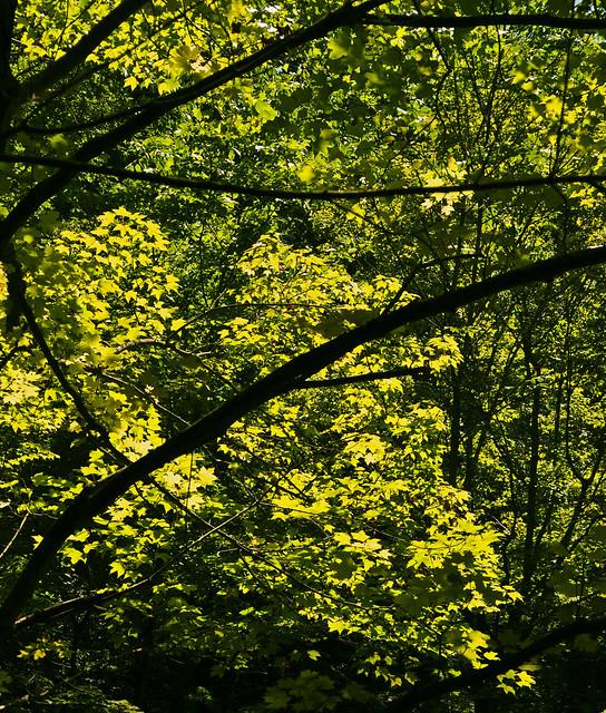 Tyranny of Green (2)
