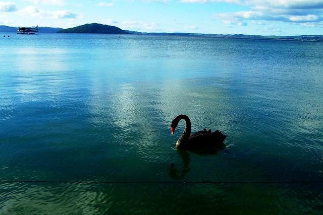 Lake Rotorua New Zealand