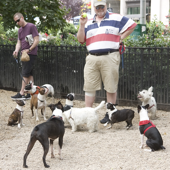 Boston Terrier meetup