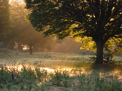 The Tumulus Field at Sunrise (Laura Nolte) Tags: park morning england sunlight london sunrise heath hampstead hampsteadheath northlondon