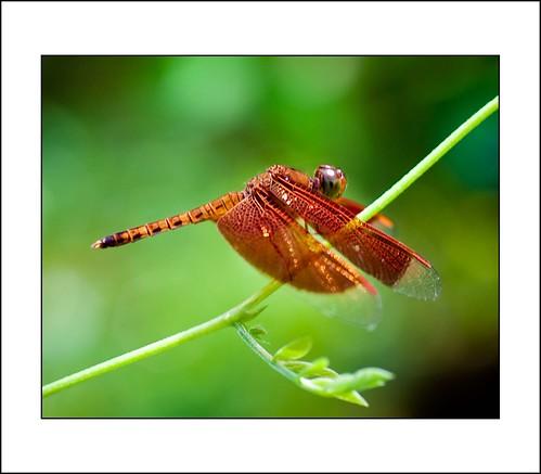 vlinder by hans van egdom