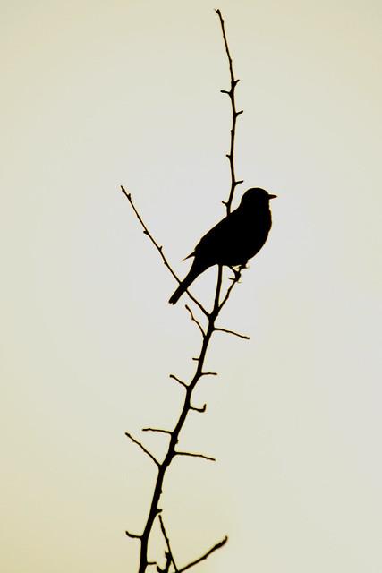 Day 308 - Lone Bird