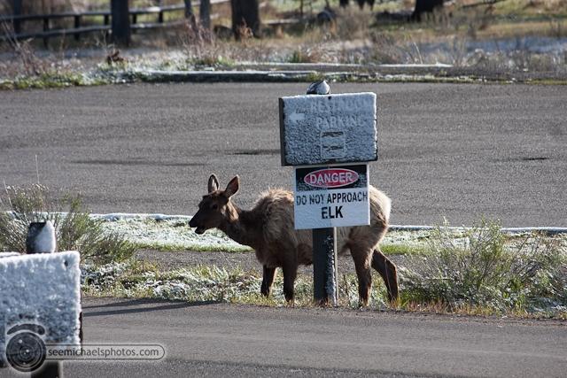 Yellowstone Day 2 52711 © Michael Klayman-024