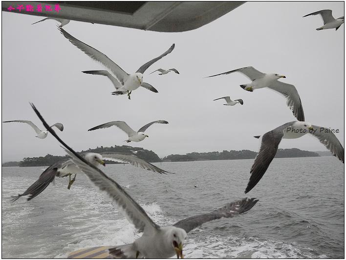 仙台松島遊船餵海鷗-26.jpg