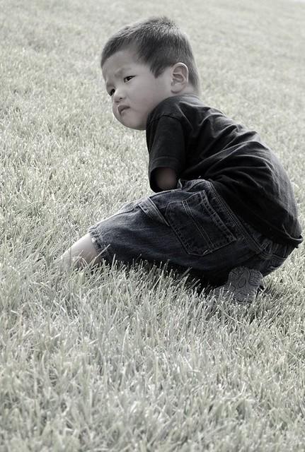 Milo in the Grass