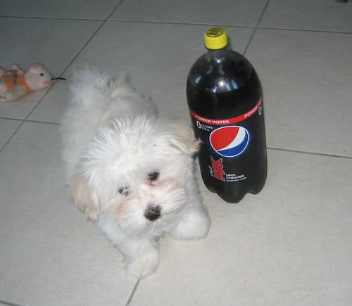 Toby 12 1/2 weeks