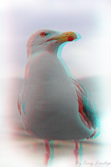 3D seagull (craiggy13x) Tags: lighting new old uk light sea england bird art beach birds speed photoshop canon lens manchester fun photography photo 3d cool arty slow shot image cs2 photos pics good framed edited seagull flash tripod ace fast pic x craggy filter photograph frame craig shutter editing framing dslr filters 13 beech lam edit speeds lenses slur cs3 cs4 2011 cs1 cs5 40d lindop canon40d craiglindop craiggy13x