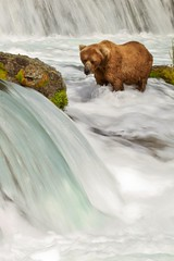 Brown Bear (toryjk) Tags: bear alaska brownbear brooksfalls katmai