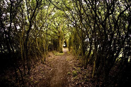 [フリー画像] 自然・風景, 森林, 樹木, 道, 201107181900