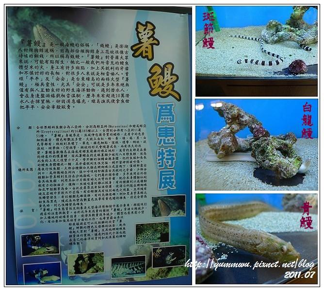 110711小丑魚主題館 (47)