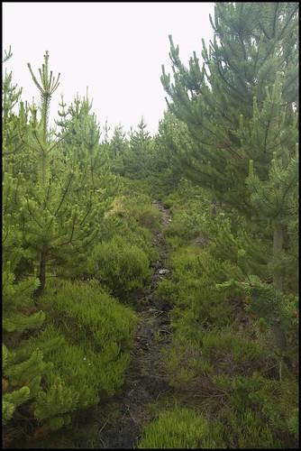 Hill Track II