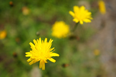 DSC04023 (MaoPoPo & BiangBeiBei) Tags: flower landscape taiwan