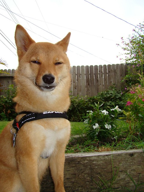 "taro shiba: ""seriously. it is way to early in the morning to use the camera flash. knock it off."""