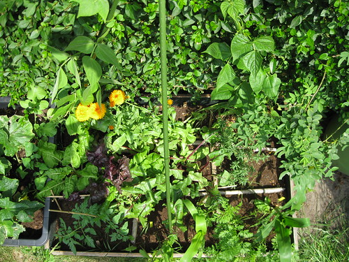 vierkant tuinieren