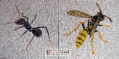 formica e vespa (Arianna Mosaici) Tags: insect wasp mosaic ant mosaico formica insetti mosaici