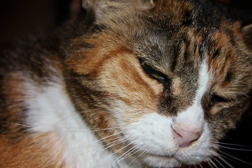 Day 203:  Grumpy Cat