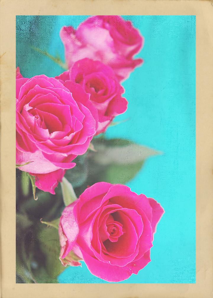 Roses 012 copy