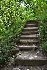 Woodland Stairs (The Jaybird) Tags: wood trees wild england plant colour tree green nature field grass leaves rock architecture forest river landscape outside outdoors countryside waterfall rocks stream outdoor path wideangle falls foliage footpath ingleton ingletonfalls