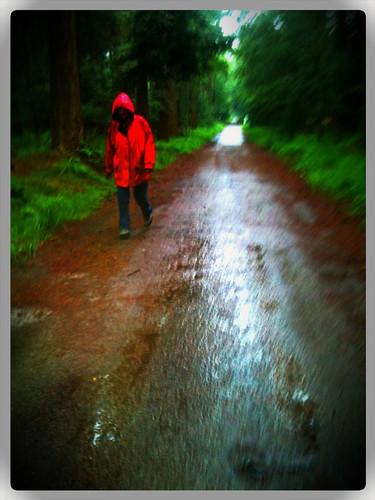 Rainy walk in the woods