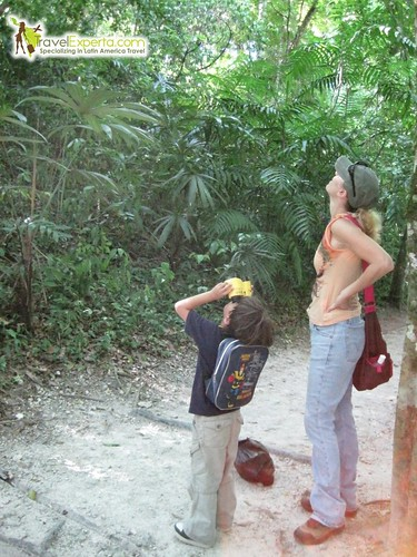 Bird and Wildlife Watching on Tikal's Rain Forest Trails