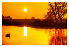 Golden Hour 2 (Vijay_ktyely) Tags: england sun color reflection bird colors beautiful birds clouds sunrise canon countryside duck europe shot bokeh explore lovely capture hue goldenhour greatouse cs5 canon55250 greatouseriverbankriverbank