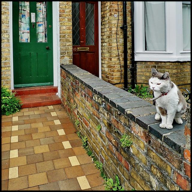 Best of Oxford Gardens 115