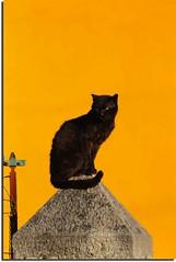 Lo stilita (meghimeg) Tags: yellow cat fence explore gelb giallo gatto 2011 recinzione pilastro cairomontenotte