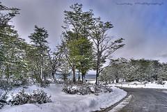 Camino al canal... (Lumley_) Tags: beagle tierradelfuego ushuaia photography canal nikon foto arboles camino carretera nieve 1855mm lumley fin mundo nevar d60 argentinta fografía