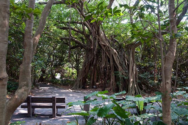 志戸子ガジュマル公園