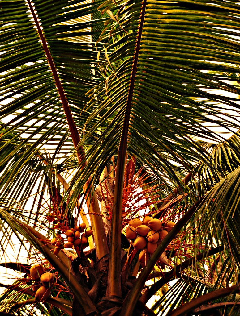 Nature's Bounties...from  Kerala, Land of Coconut Trees