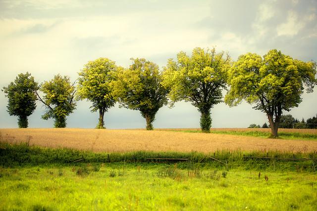 Svedala Landscape