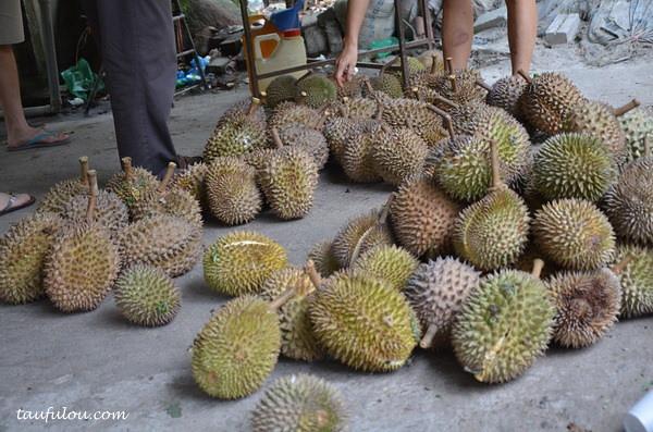 balik pulau durian (1)