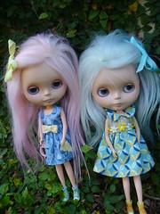 Bindi & Poppy looking for fun!!