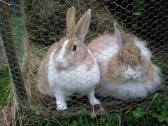 Dutchy and Nutmeg