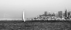 Yacht, San Francisco Bay (andy p m) Tags: sanfrancisco california white black water landscape mono bay sailing yacht