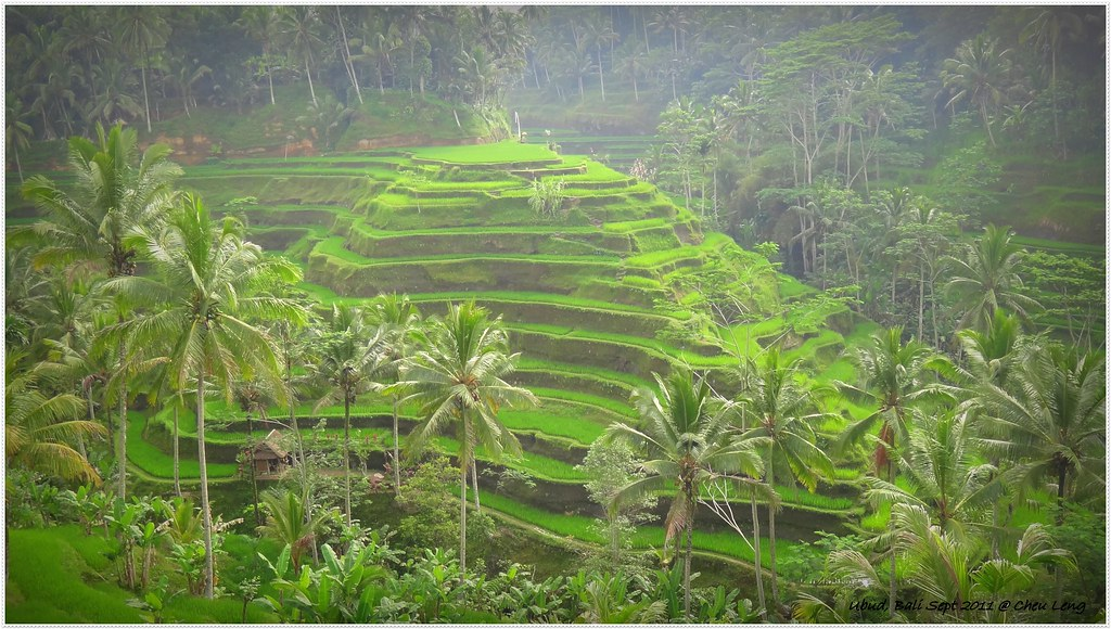 Rice Terrace at Tegallalang, Ubud