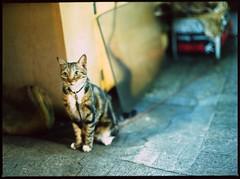 freedom (Egg Cheung) Tags: cat kodakektachromee100vs 80mmf19 mamiyam6451000s