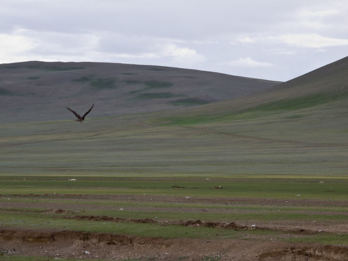 Bird flying over steppe