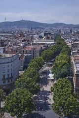 Barcelona: Green Line (Mr.Enjoy) Tags: barcelona above city travel trees columbus urban building monument plane mall spain horizon catalonia lasramblas tibidabo ramblas colonnade colom platanusxhispanica pwedestrian