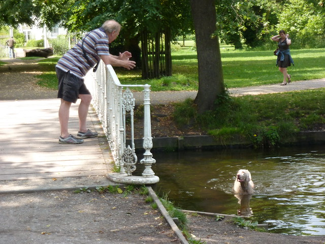 Dog having a splash around in Morden Hall Park