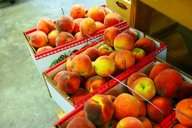 Peaches at Mercier Orchards {Blue Ridge, Georgia}